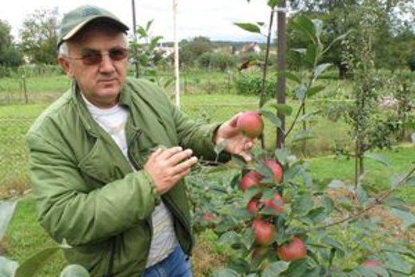 Miloš Polcer ukazuje jablko odrody Selena, ktoré chrastavitosť nepostihla.