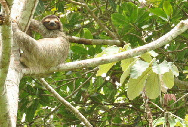 Atrakciou Parque Natural Metropolitano sú hlavne divožijúce zvieratá.