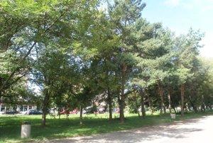 Prievidza chráni zeleň aj odkupovaním pozemkov, na ktorých by mohla byť nekoncepčná výstavba.