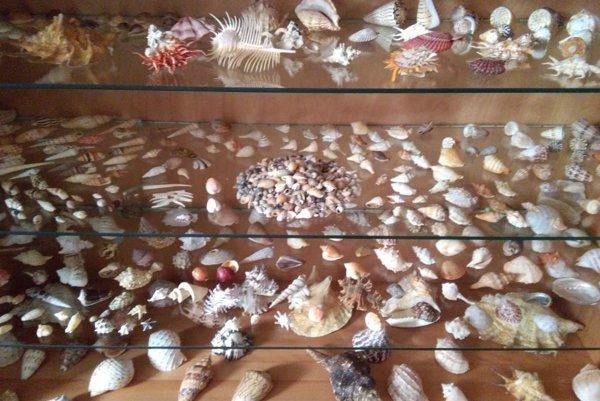 Výstava predstavuje najrozmanitejšie druhy mušlí