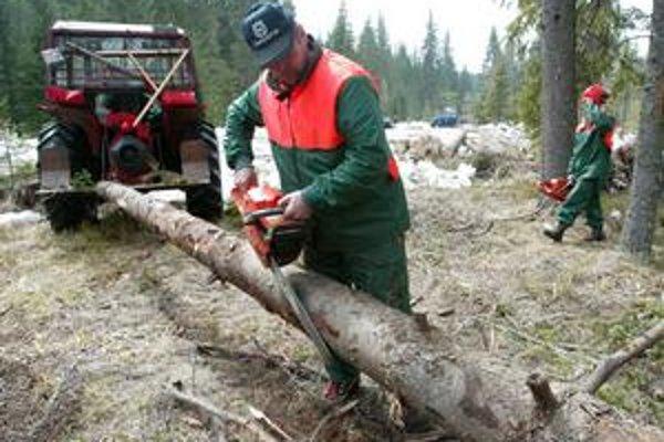 S počítačovým systémom pomôže lesníkom drahá konzultačná firma.