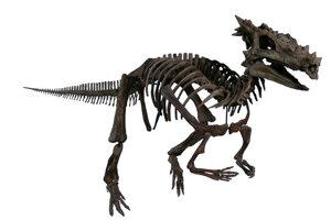 """Meno vyhynutého druhu dinosaura Dracorex hogwartsia v doslovnom preklade znamená """"dračí kráľ Rokfortu."""""""