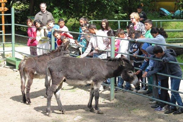 Spišskonovoveská zoo.