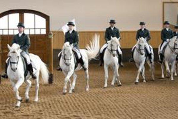 Dlhú cestu do srdca Európskej únie museli zvládnuť aj kone z Topoľčianok. Lipicana z tohto chovu sme darovali aj britskej kráľovnej Alžbete II.