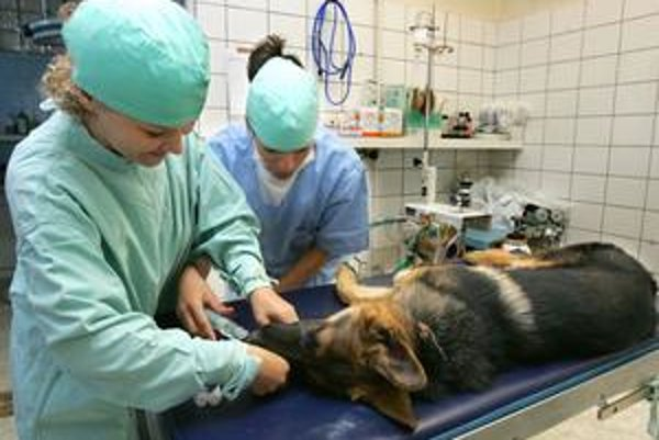 Veterinárov si vieme vychovať. Košická veterina ako prvá obstála v hodnotení univerzít.