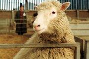 Dolly viedla takmer normálny ovčí život.