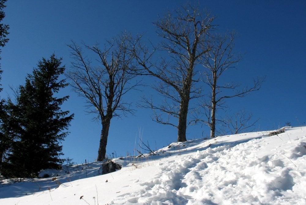 Pod vrcholom Borovniaku.