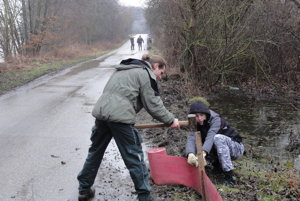Ochranári stavajú zátarasy, ktoré znemožnia žabám dostať sa na cestu za Jelencom.