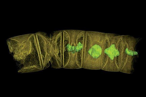 Tomografické zobrazenie najstarších fosílií viacbunkových organizmov.