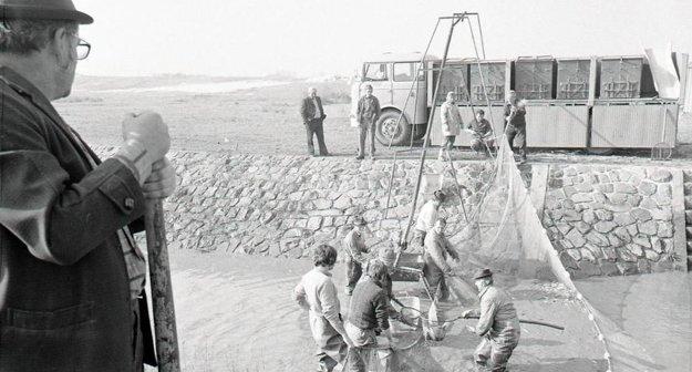 Jesenný výlov vo Veľkých Dravciach v roku 1977.