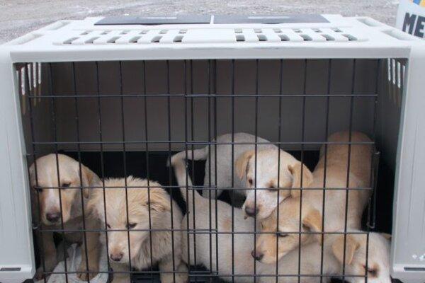 Tieto šteniatka zachraňovali mestskí policajti.