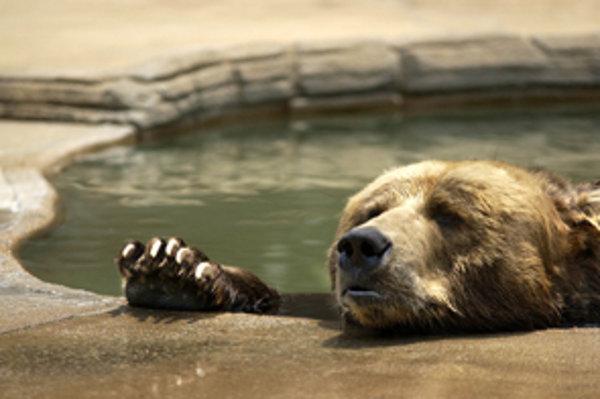 Ľudia zberom lesných plodov ochudobňujú hlavne medvede.