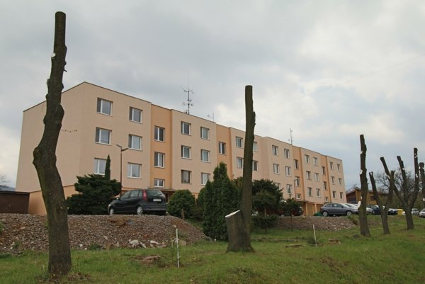 Lipy vraj boli napadnuté plesňou a ich peľ spôsoboval obyvateľom bytovky problémy.