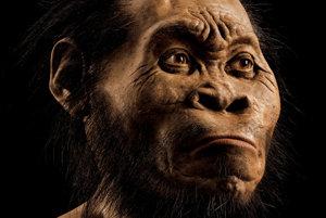 Rekonštrukcia tváre Homo naledi pre magazín national Geographic o paleoumelec John Gurche.
