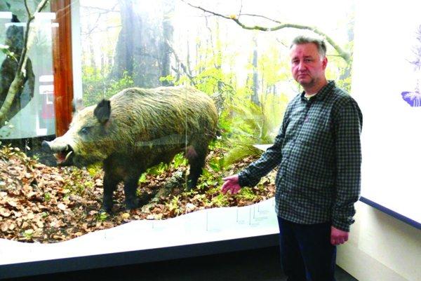 Boris Astaloš rozpráva príbeh dvestokilového diviaka z ich múzea.