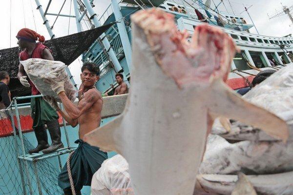 Na lodiach pracujú väčšinou kúpení migranti.