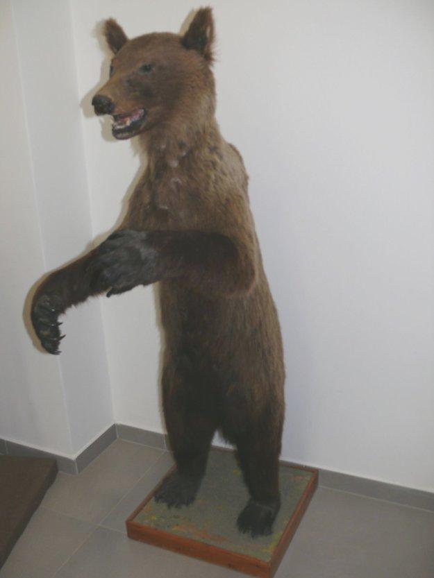 Jeden z prvých kontajnerových medvedíkov doplatil na prikrmovanie ľuďmi.