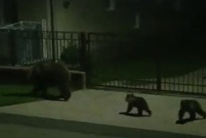 V Liptovskej Kokave. Takto sa spolu premávali po obci a hľadali niečo pod zub.