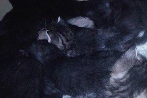 Postrelená Cuki si adoptovala mačiatka, ktoré tiež skončili v útulku.