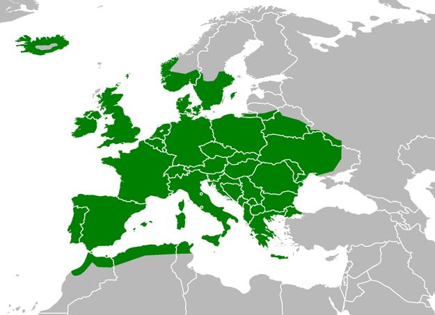 Mapa výskytu ryšavky krovinnej.