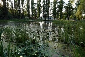 Neďaleká vodná plocha. Pre život žiab v tomto štádiu ich života je vhodnejšie toto jazierko v parku.