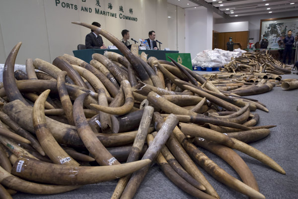 Slonovina bola objavená v 12 metrov dlhom kontajneri z Malajzie.