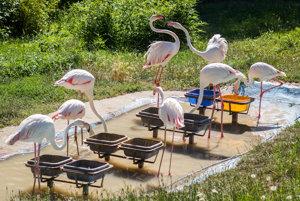 V bratislavskej ZOO vysychajú jazerá, zvieratám chýba voda.