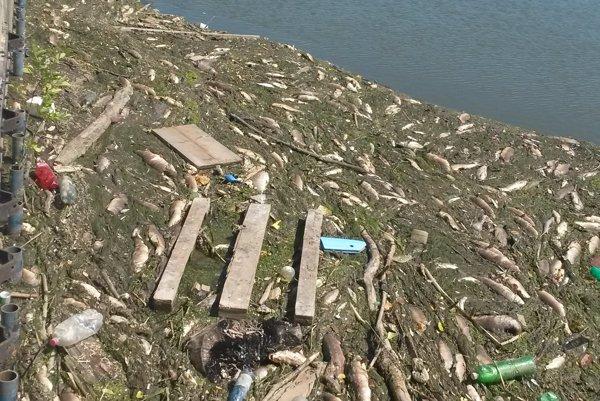 Na Váhu uhynuli tisíce rýb.