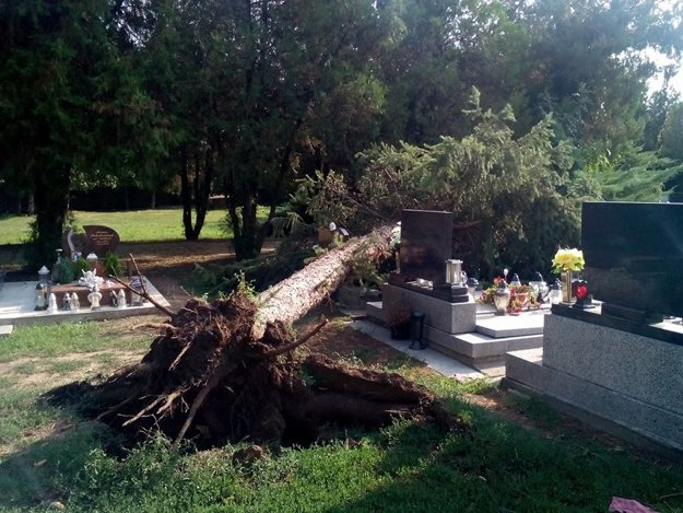 Strom vyvrátilo aj s koreňmi.
