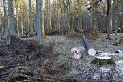 Drevo z lesa ťahal muž na popruhu.