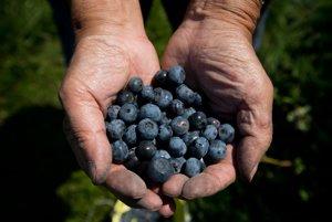Bobuľové ovocie ako sú čučorieky a brusince obsahujú množstvo antioxidantov, ktoré môžu chrániť pečeň pred poškodením.
