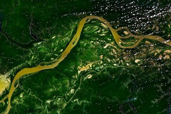 Dažďový prales v okolí rieky Amazon.
