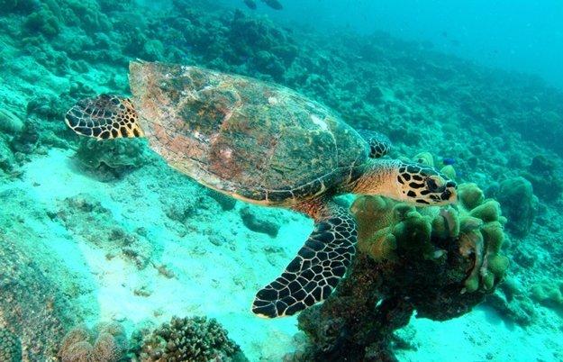 Podmorský svet v okolí Praslinu je krásny