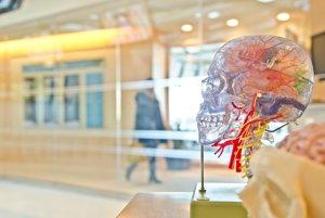 Výskum ukázal, že pre inteligenciu ne dôležitá nie len schopnosť mozgu informácie získať, ale aj schopnosť informácie potlačiť.