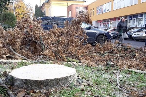 Do jari z mesta zmizne 24 inváznych stromov.