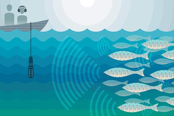 Vedci nahrávali zvukové vábenie rýb v Kalifornskom zálive pri Mexiku.