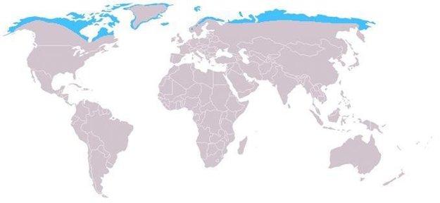 Modrou sú zvýraznené miesta, kde je líška polárna doma.