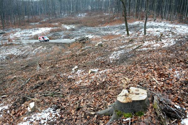 Nové rúbanisko. V niektorých častiach zašli lesohospodári od cesty aj niekoľko desiatok metrov.