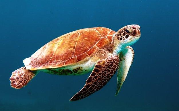 Chránené morské korytnačky sú symbolom Zakynthosu