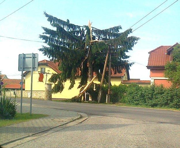 Strom zasiahnutý bleskom v Opatovciach nad Nitrou.