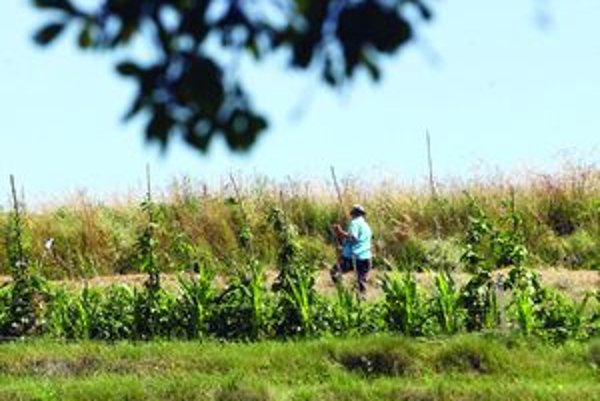 Na drevný opál obyvatelia neraz narazia pri bežných poľnohospodárskych prácach, občas ho zas vyryjú diviaky.