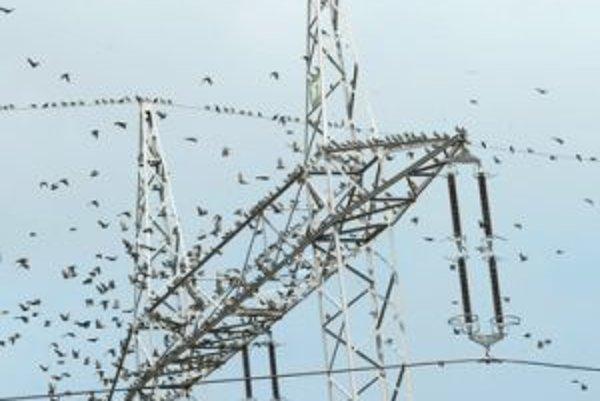 Odlety sťahovavých vtákov si môžeme najlepšie vychutnať začiatkom septembra