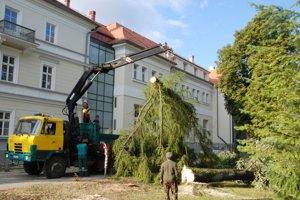 Výrub stromov v Turčianskych Tepliciach.