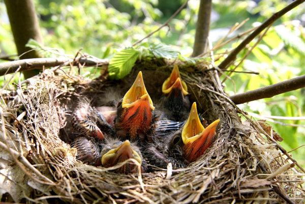 Prírodovedec Ján Boroškay zbieral vtáčie vajcia, jeho zbierka sa zachovala dodnes.