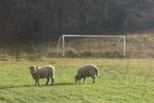 Miestne futbalové ihrisko. Liga sa tu nikdy nehrávala.