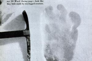 Údajná stopa Yetiho, ktorú našiel na ľadovci Menlung účastník expedície na Everest v roku 1951.