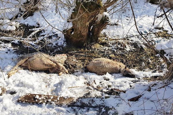 Uhynuté ovce našli v priekope pri potoku v blízkosti zdroja pitnej vody.