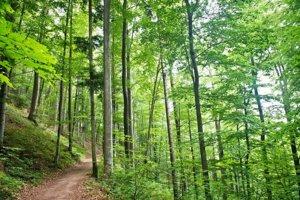 Lesy v lokalite Počúvadlo.