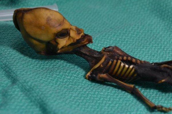 Kostra dievčaťa, ktoré dostalo meno Ata, vykazovala mnoho mutácií.