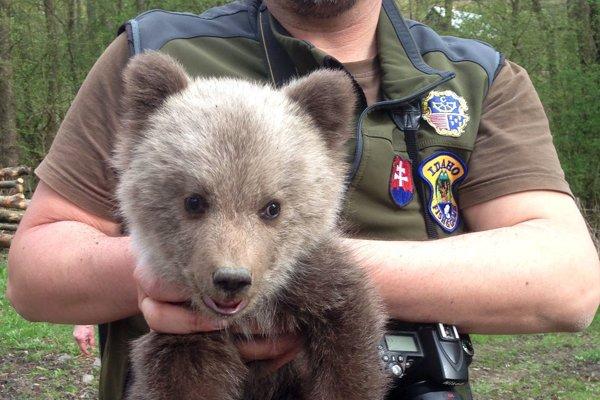 Medvedíka vrátili späť do lesa.